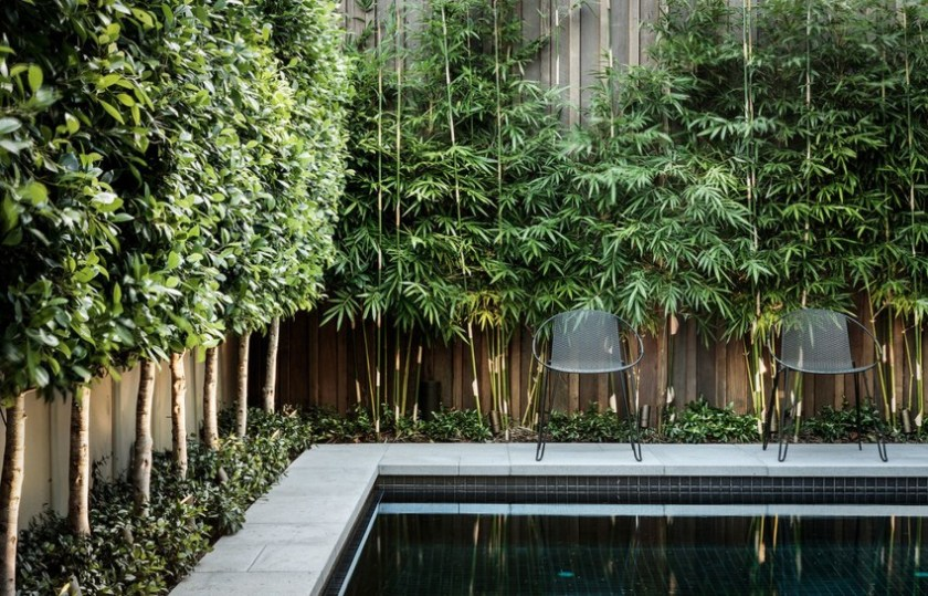 bamboo_poolside_fence